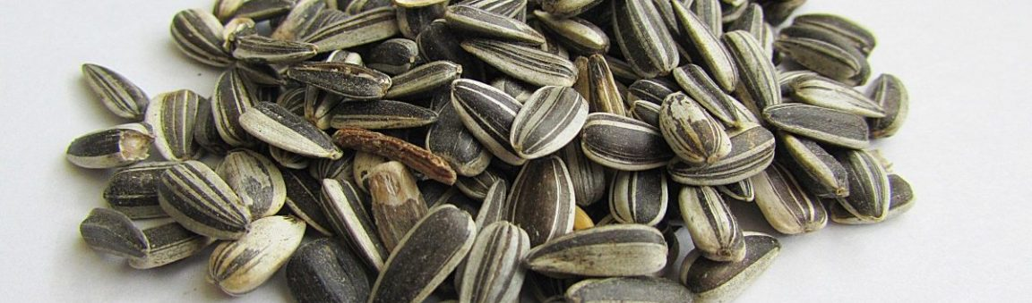 Beer-Baked Sunflower Seeds